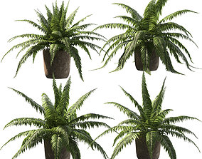 Fern in pots - 4 models 3D
