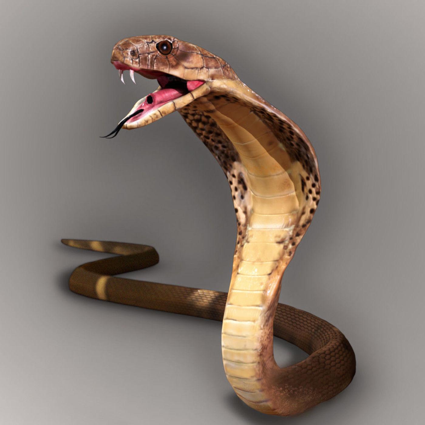 King Cobra Snake Model