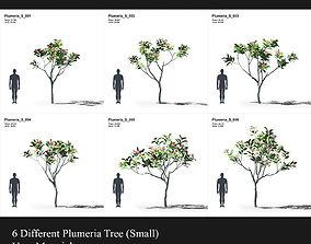 Plumeria Collection 1 3D