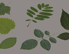 3D model Leaf Pack