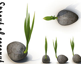 3D model Sprout of coconut 1