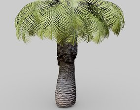 Small Palm Tree 3D model