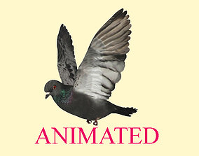 Animated flying realistic pigeon bird 3D asset game-ready