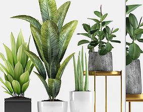 Plants 211 3D model