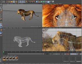 Lion Savane 3D model
