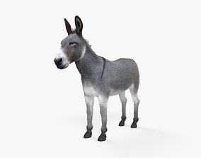 3D model Donkey HD