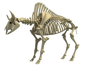Buffalo Bison Skeleton 3D