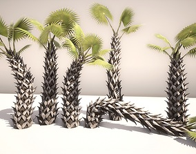 3D model Sabal Palm