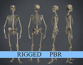 Rigged Human Skeleton 3D asset game-ready