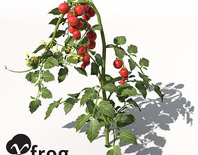 XfrogPlants Tomato 3D model