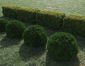 Hedge of bushes 3D model ligustrum