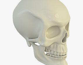 skull Human Skull 3D