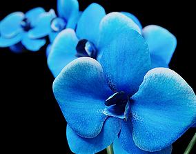 3D model a BLUE Orchid