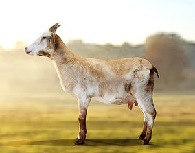 3D model Goat - Male and Female