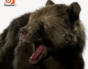 grizzly bear rigged houdini 3D model