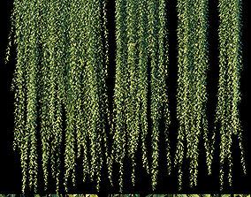 3D Vernonia Elliptica - Curtain Creeper 3