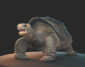 Large land turtle PBR 3D asset game-ready