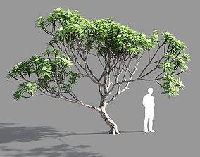 Plumeria 3 3D model