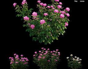 3D Rose plant set 23 pink