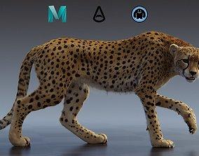 Cheetah 3D model rigged