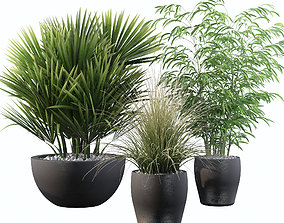 3D model Plants collection 080