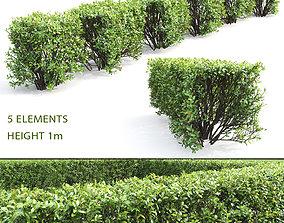 Cotoneaster lucidus hedge 04 3D model