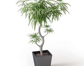 3D Potted Leaf Tree