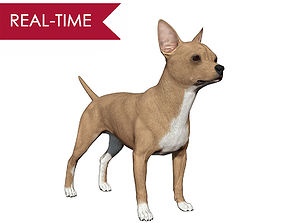 3D model VR / AR ready Chihuahua Real-Time