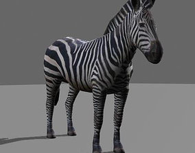 animated Incredible LOW POLY Zebra - 3d model