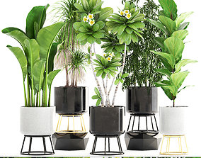 3D model pot Collection of plants
