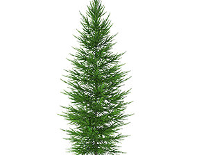 Norway Spruce Picea abies 3m 3D