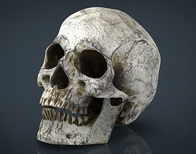 3D asset Skull and Jaw