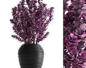 Plant in pot berberis 3D model