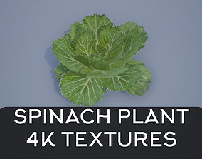 3D model 4K Spinach Plant
