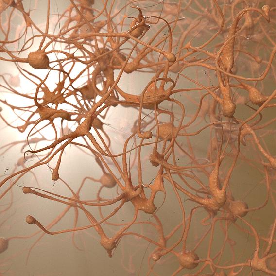 Procedural neurons
