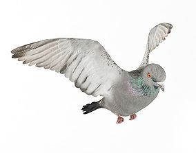 Flying White Pigeon 3D model