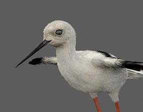Realistic Stilt rigged animated bird with feather 3D model