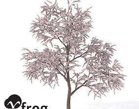XfrogPlants Almond Tree 3D model