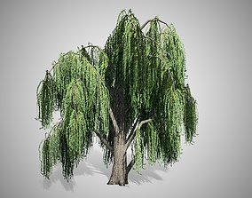 3D model VR / AR ready Weeping Willow Tree