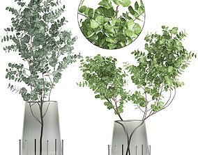 3D Bouquet of Eucalyptus branches in a vase 100