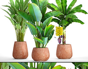 Collection of plants banana 3D model