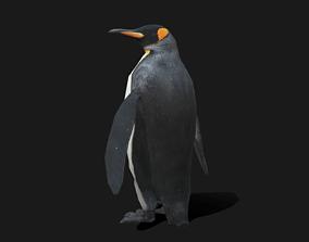 King Penguin - Animated 3D asset