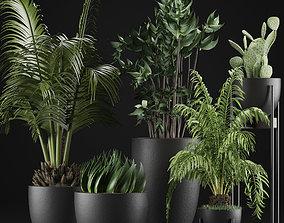 3D Plants Collection 24