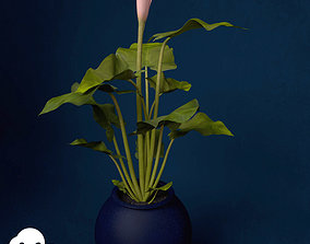 3D model XfrogPlants Calla Lily