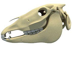 3D High Quality Horse Skull