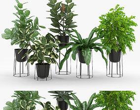Ficus Set 3D benjamin