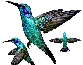 3D asset Hummingbird