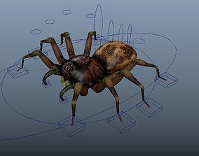 Spider Rigged 3D asset