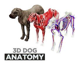3D model Dog Anatomy with internal organs - 4k textures