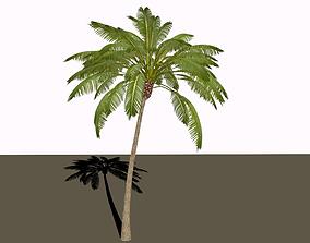 3D Palm tree vehicles-challenge